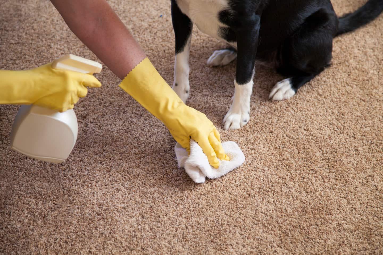 Чем отмыть белый ковер в домашних условиях