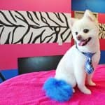 This pup's dressed for success with a blue tail and necktie. (Photo courtesy of Misty Gieczys)