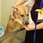 dog at the Humane Society of Indianapolis
