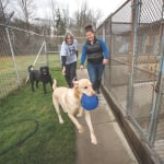 dogs at kennel