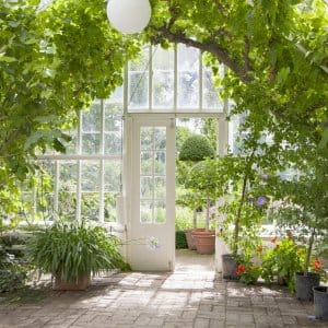 Add vining plants to a greenhouse. (Photo courtesy of Daniel-Hjalmarson)