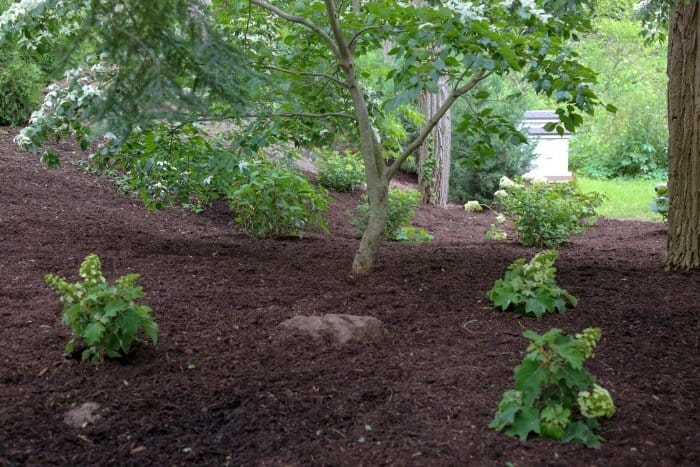 Mulching can transform a garden and give a finished look. (Photo courtesy of Melissa Caughey/Tilly's Nest)