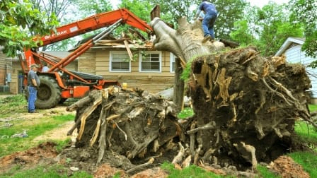 men trying to remove fallen tree on house
