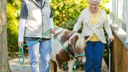 A miniature therapy horse helps a guest at highly rated Joy's House adult day care service in Indianapolis. (Photo by Brandon Smith)
