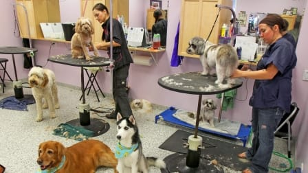 dogs getting groomed