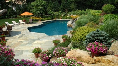 Pool with purple flowers, shrubs and plants