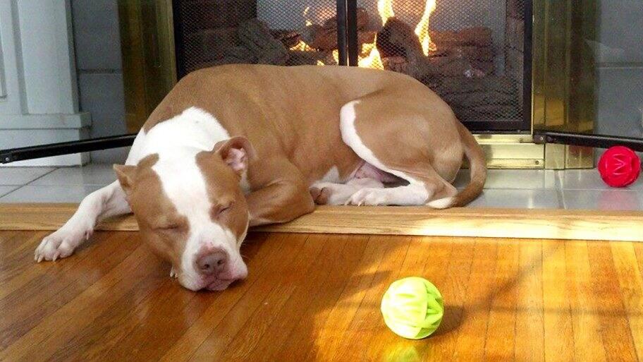 sleeping dog next to fireplace and dog toys