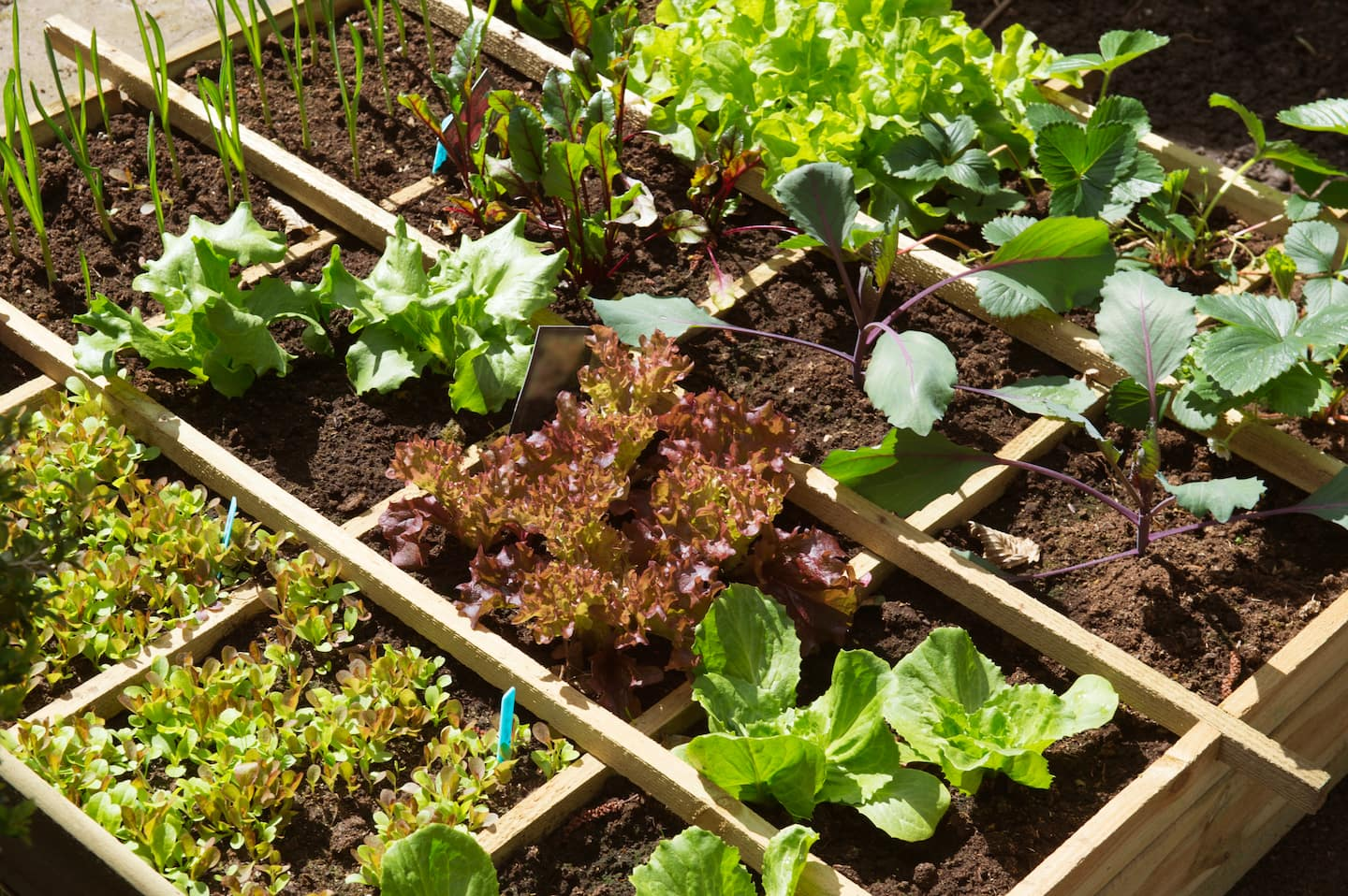 How to Plan a Vegetable Garden | Angie\'s List