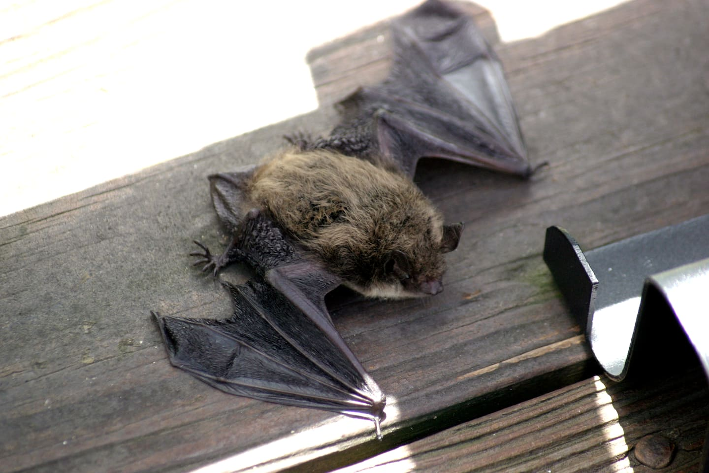 What Are The Benefits Of Bats