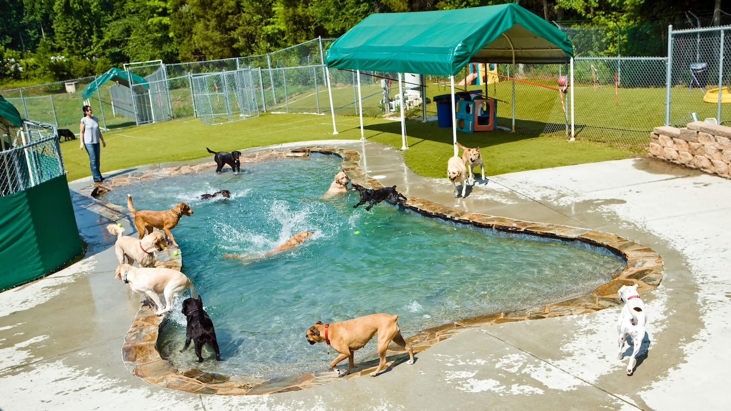 How Much Does Doggy Day Care Cost?   Angie's List