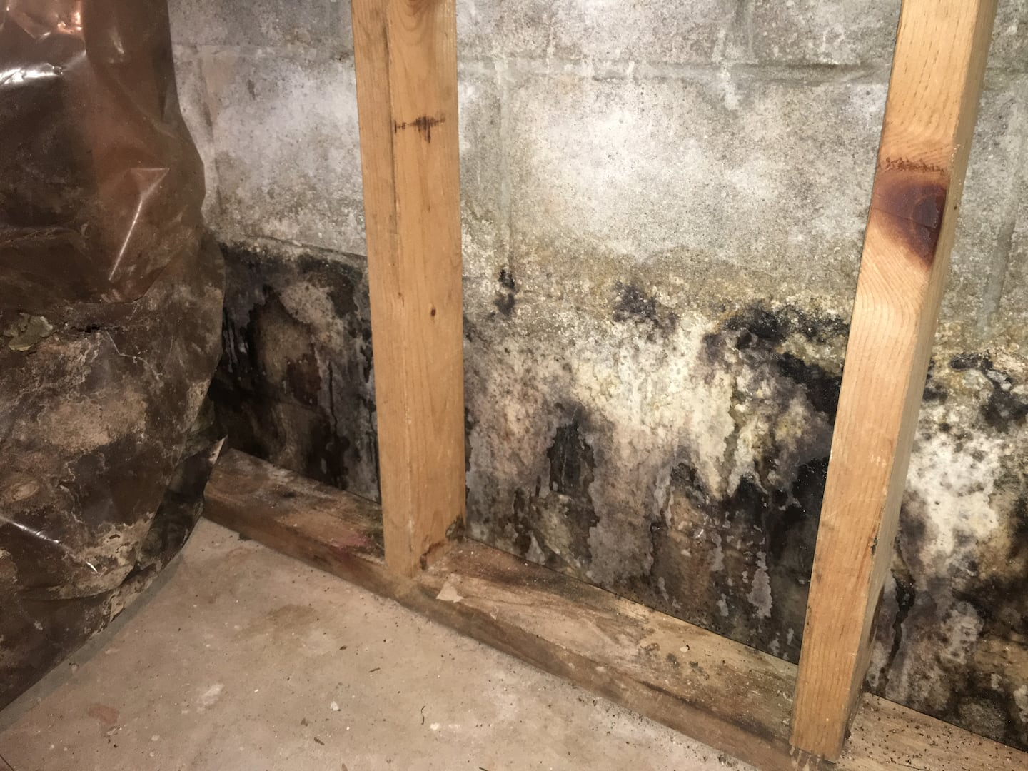 mold basement walls how to get rid of get rid of unpleasant smells