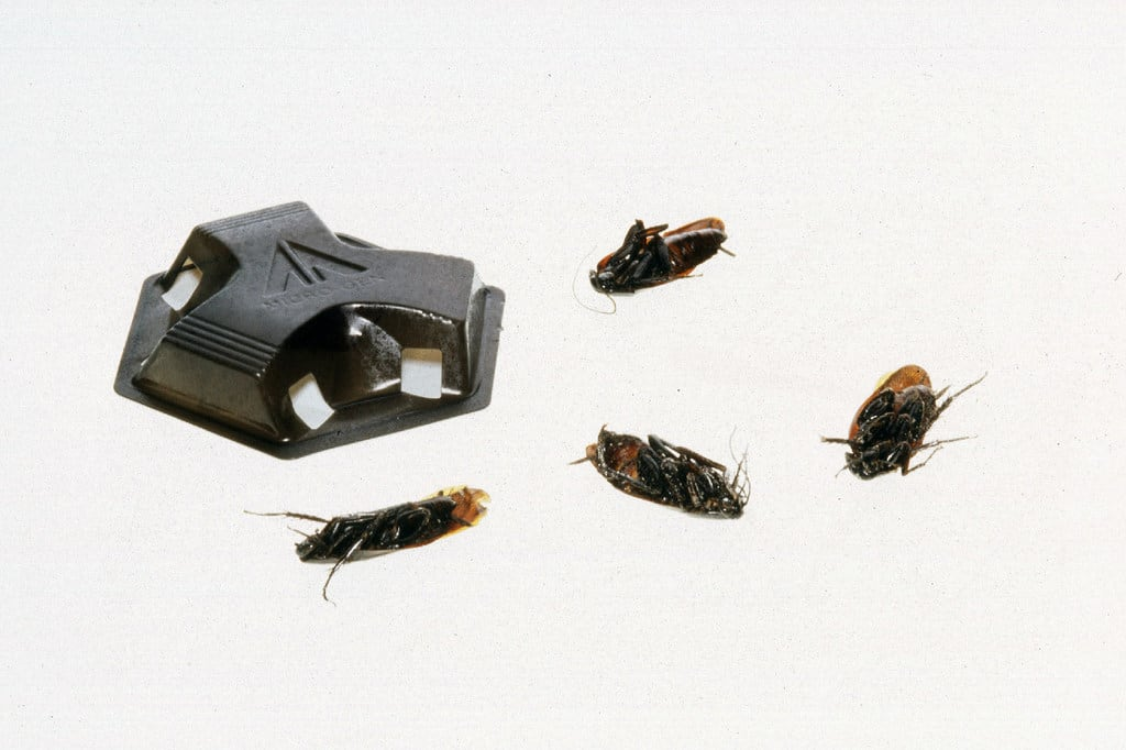 What's the Best Cockroach Killer? | Angie's List