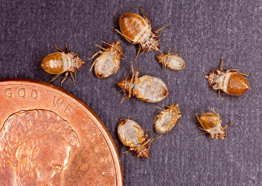 how much does bed bug extermination cost? | angie's list