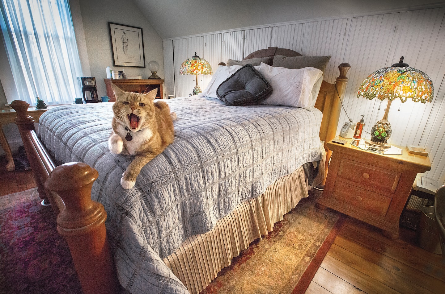 Cats Amore Felines Photobomb Nice Rooms Angie S List