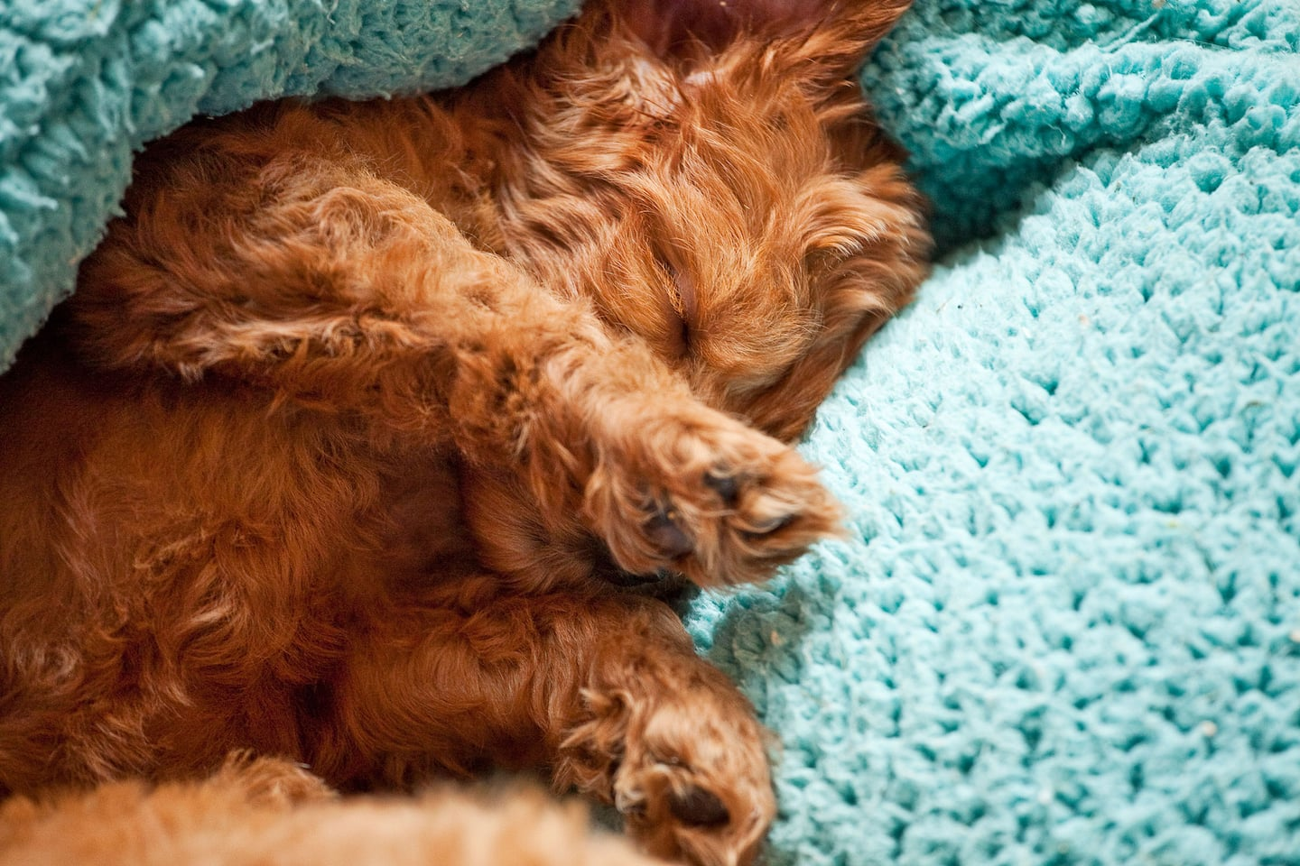 How Much Do Pet Sitters Charge? | Angie's List