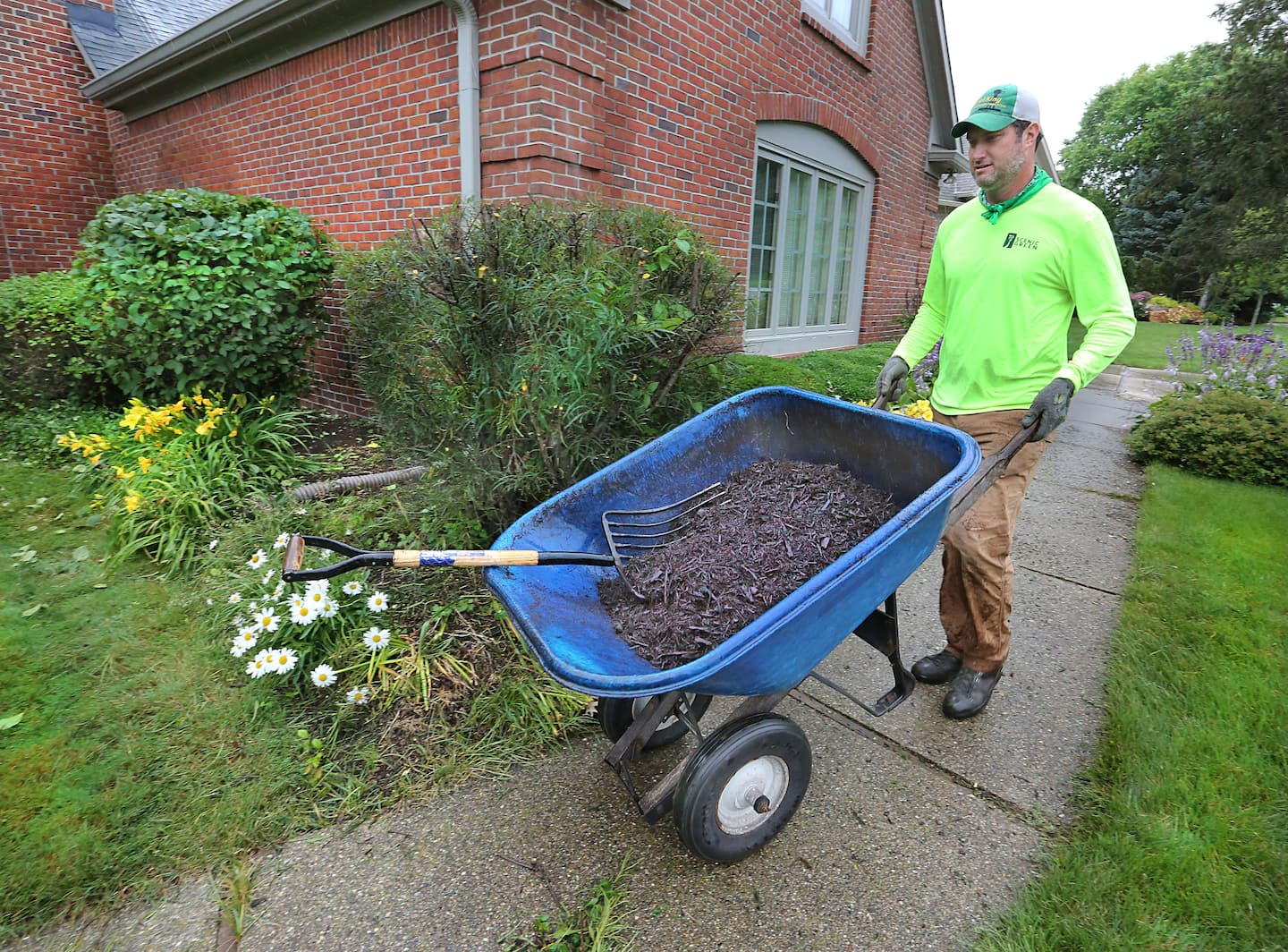 is colored or dyed mulch bad for my plants angie u0027s list