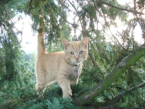 Help! Who Can Rescue My Cat from a Tree? | Angie's List