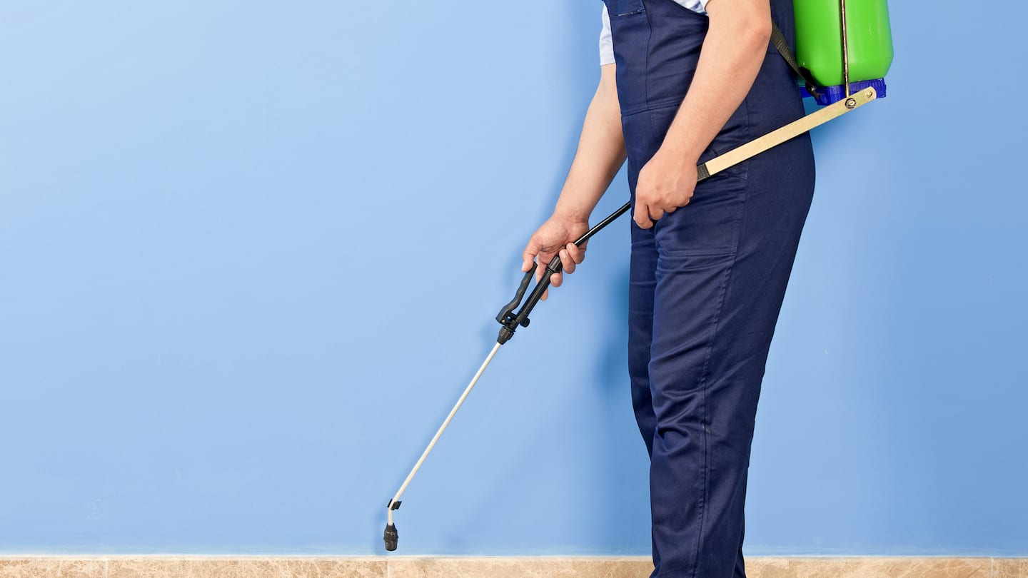 How Much Does Pest Control Service Cost? | Angie's List