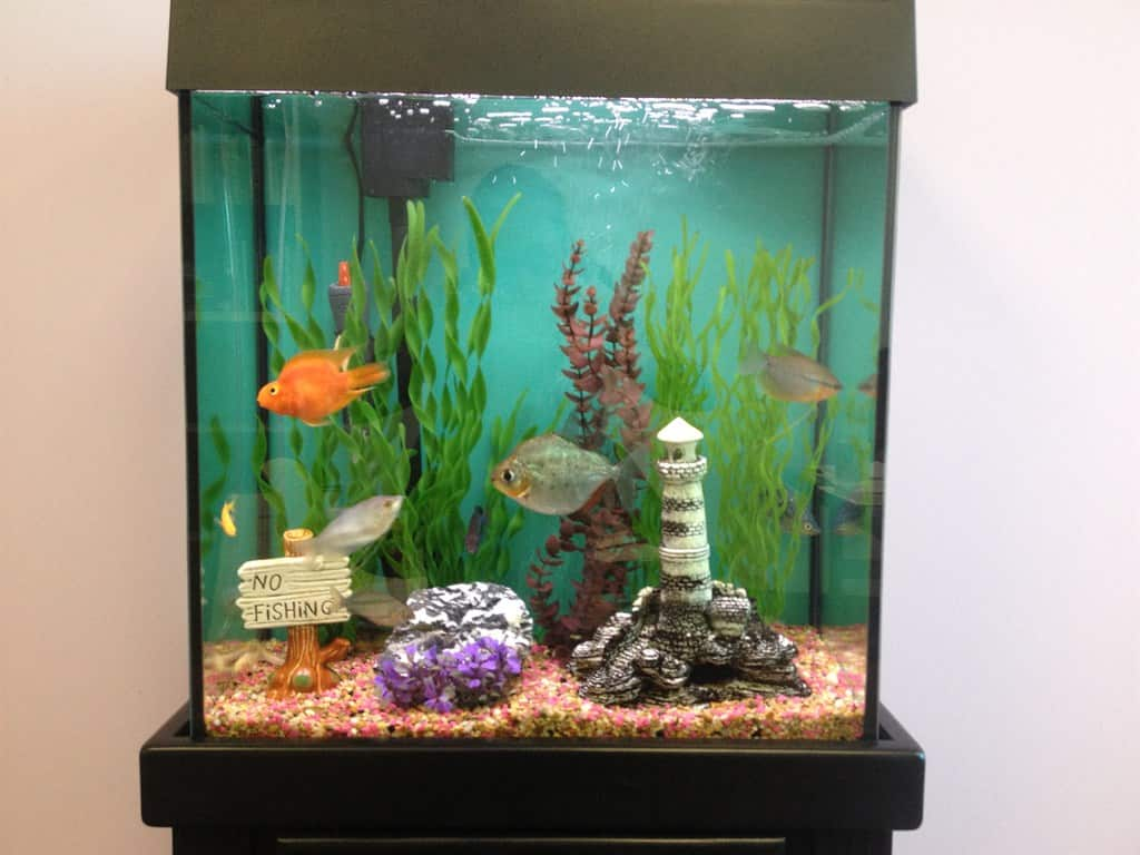 Fish tank electricity cost - Fish Tank Electricity Cost