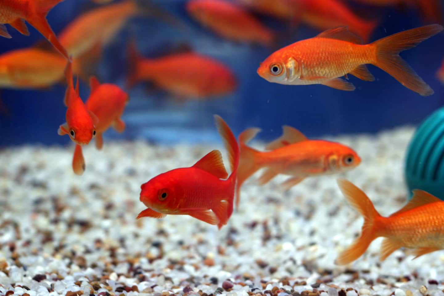 Fish tank cleaning service - How To Clean A Fish Tank