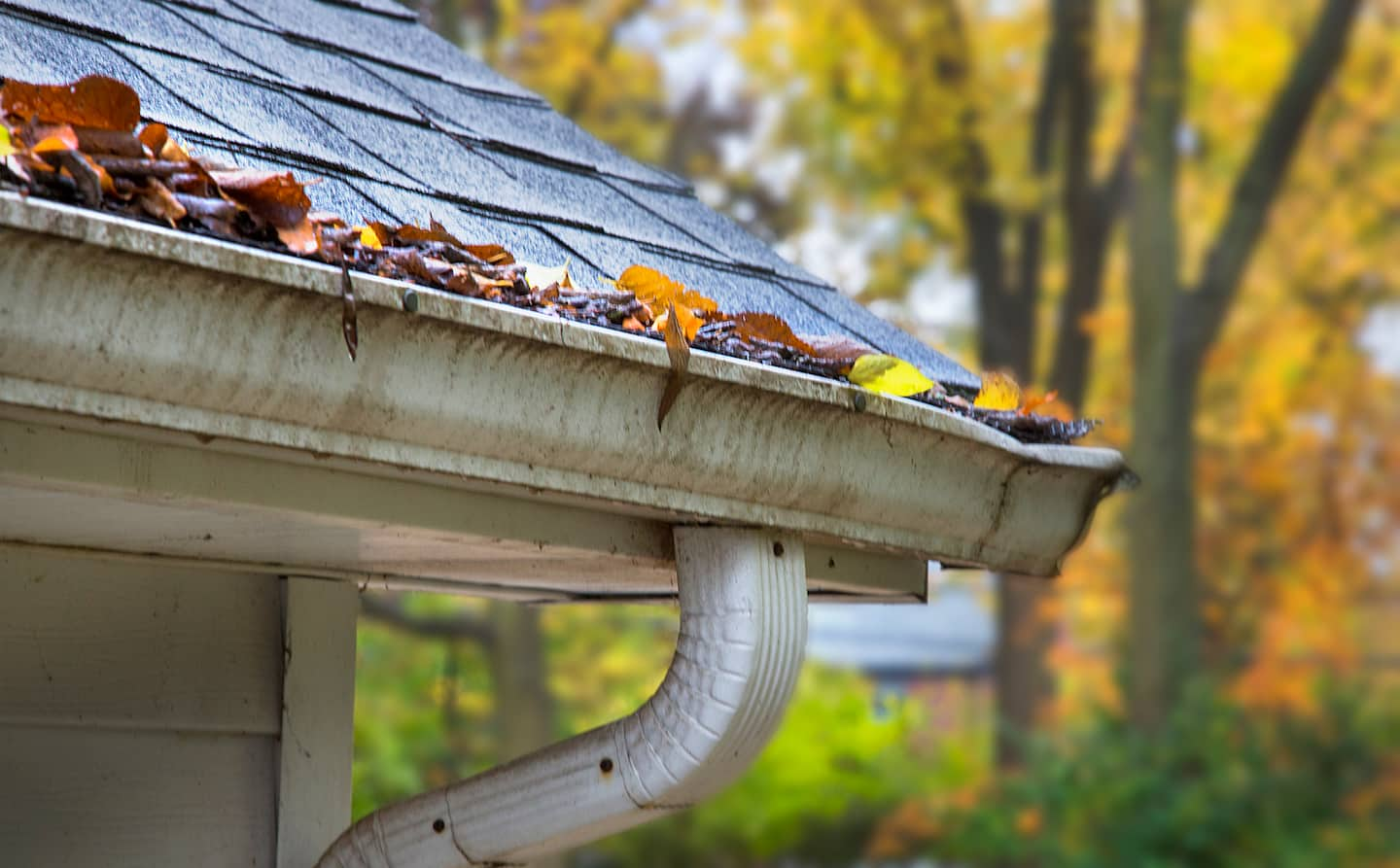 How much to charge for gutter installation - Old Gutters With Leaves Photo By Frank Espich