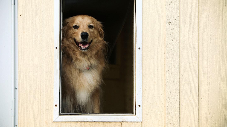 installing pet doors hire a handyman angie u0027s list
