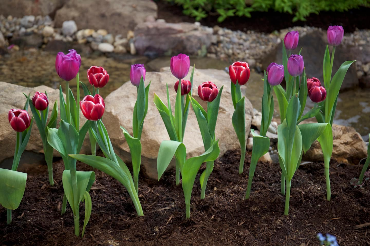 Spring Landscaping Tips tips for gardening and landscaping in early spring | angie's list
