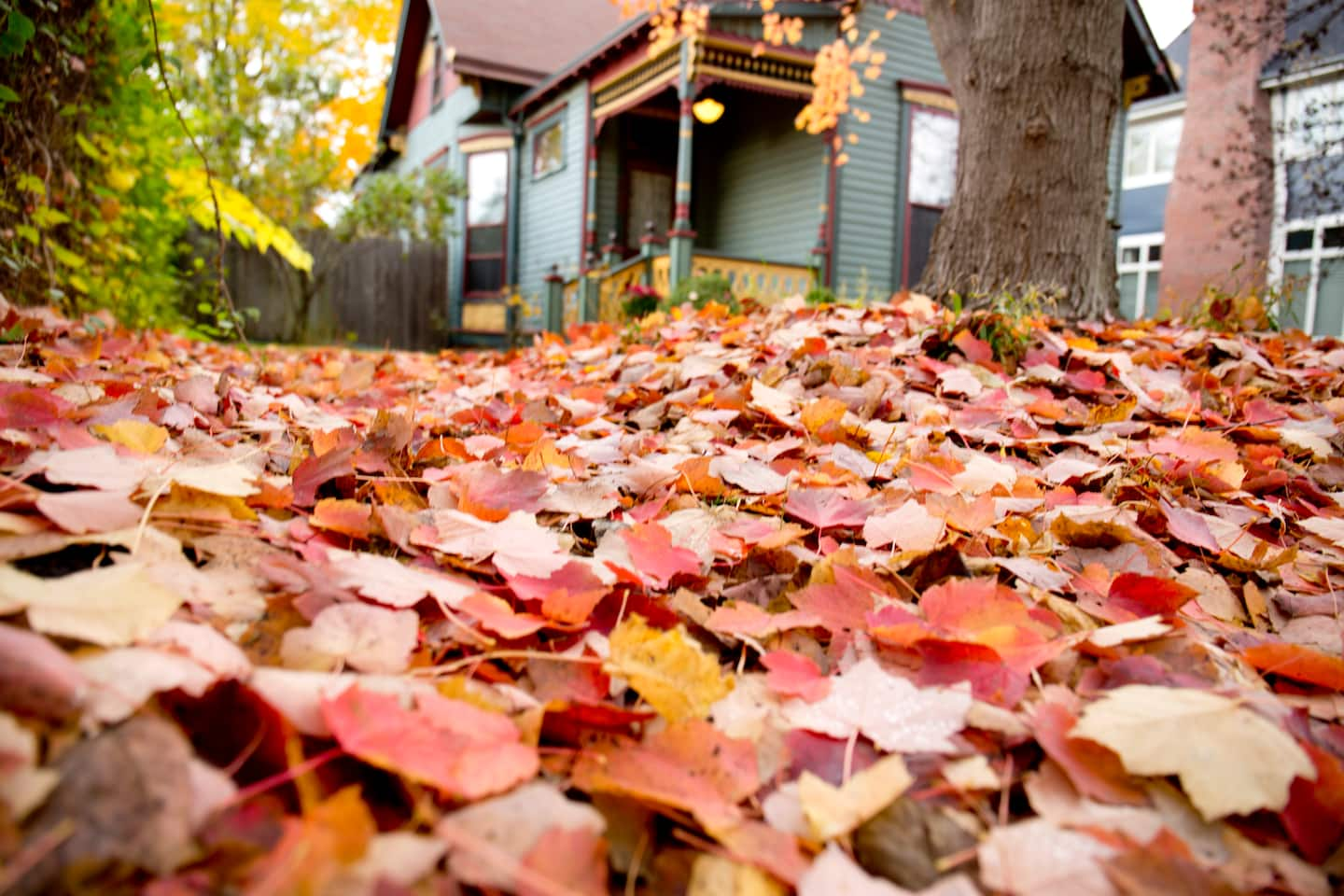 Our 4 Best Akron Leaf Removal Services Angie S List