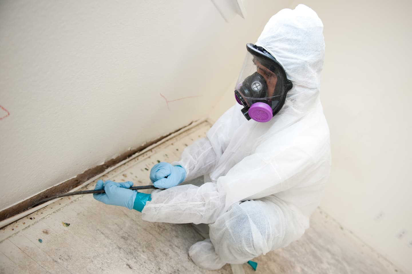 Black mold inspection cost - Black Mold Inspection Cost 18