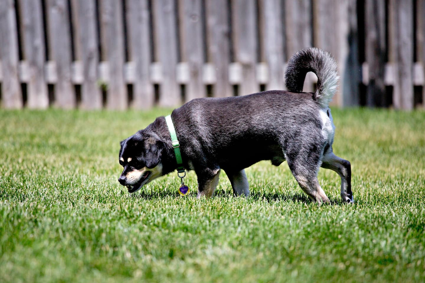 Whats The Best Fence Option To Keep Your Dog Safe