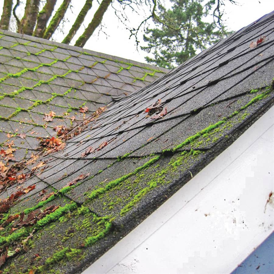 Best Bonney Lake Wa Roof Cleaning