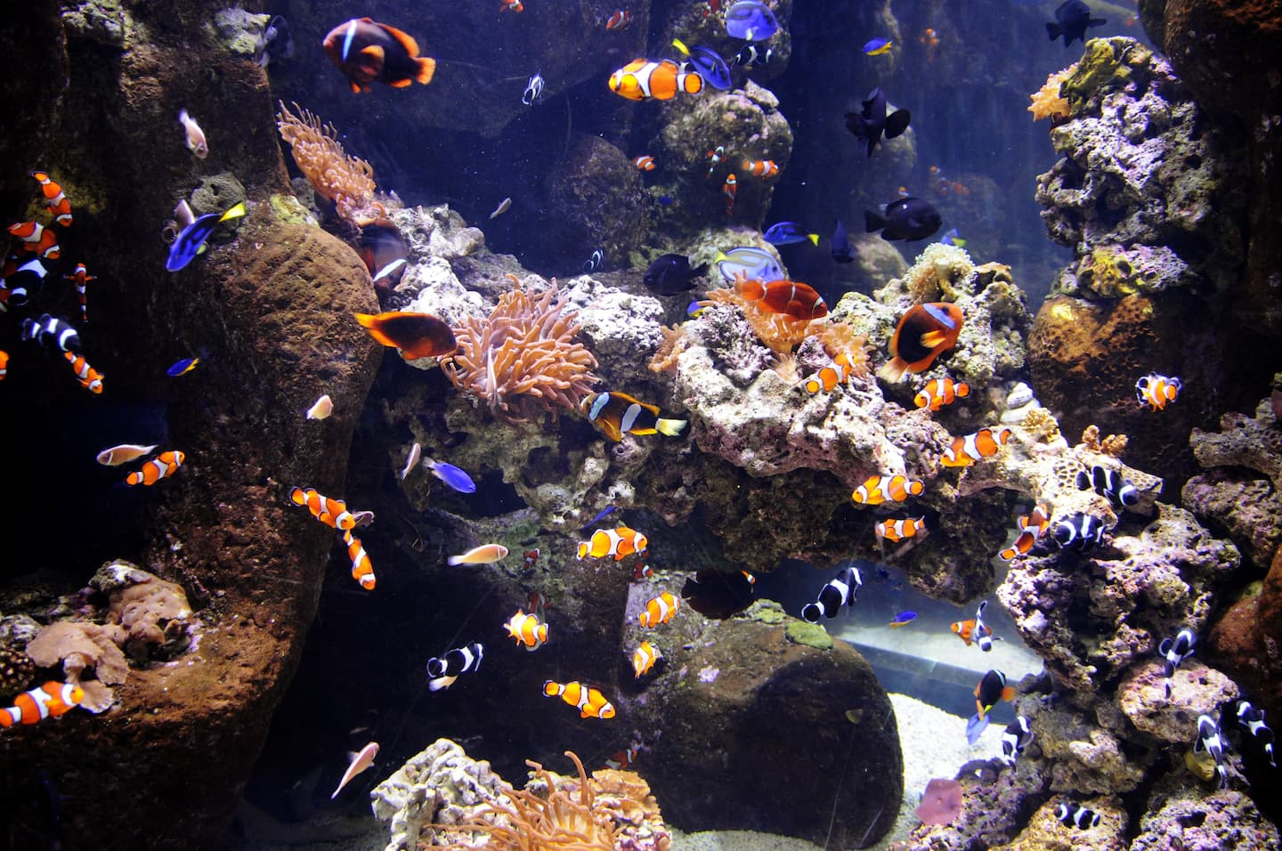 Saltwater aquarium - Where Can I Place An Aquarium
