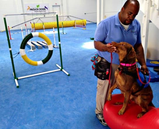 Dog gym near D.C.