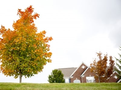 new tree planted near a home