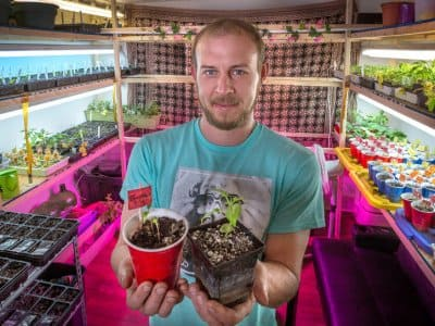 Indianapolis resident Derik Strenzel's indoor produce growing room