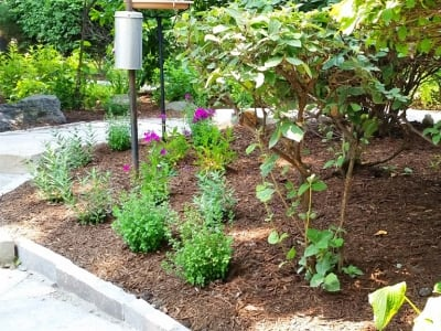 Perennial plants in plant bed
