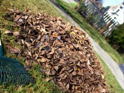 Top 10 Best Saint Louis Mo Leaf Removal Services Angie S
