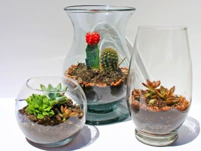 DIY terrariums in vase