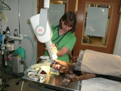 Veterinarian uses medical equipment on an unconscious dog