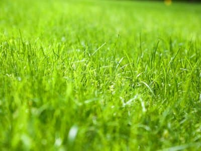 Backyard Transformation Lawn Care Tips