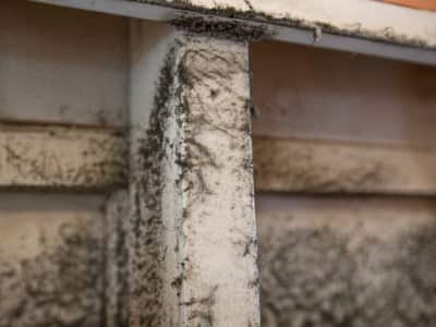 Mold in air duct