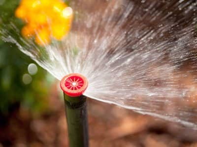 A lawn sprinkler with an orange top watering a yellow flower