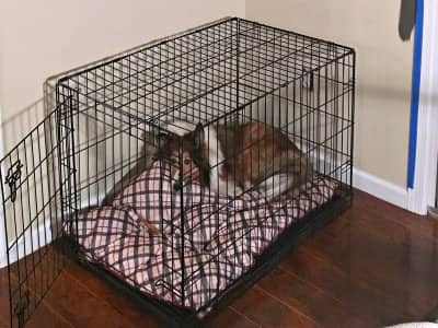 dog in dog crate