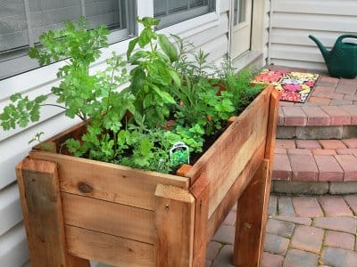 herb garden on patio