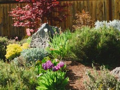 native species, tulips, dwarf evergreen