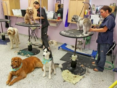local dog groomers find a top rated dog groomer on angie\u0027s listdogs getting groomed