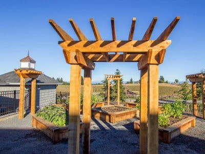 Redwood pergola in backyard
