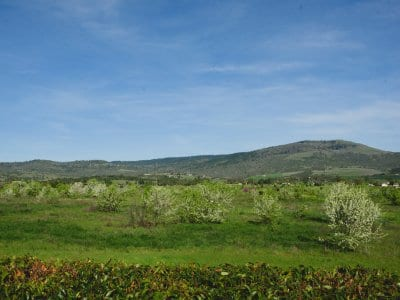 open field, green grass, shrubs, trees, blue sky
