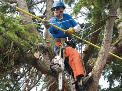 Top 10 Best New York Ny Tree Services