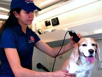 Dog grooming in Washington, D.C.